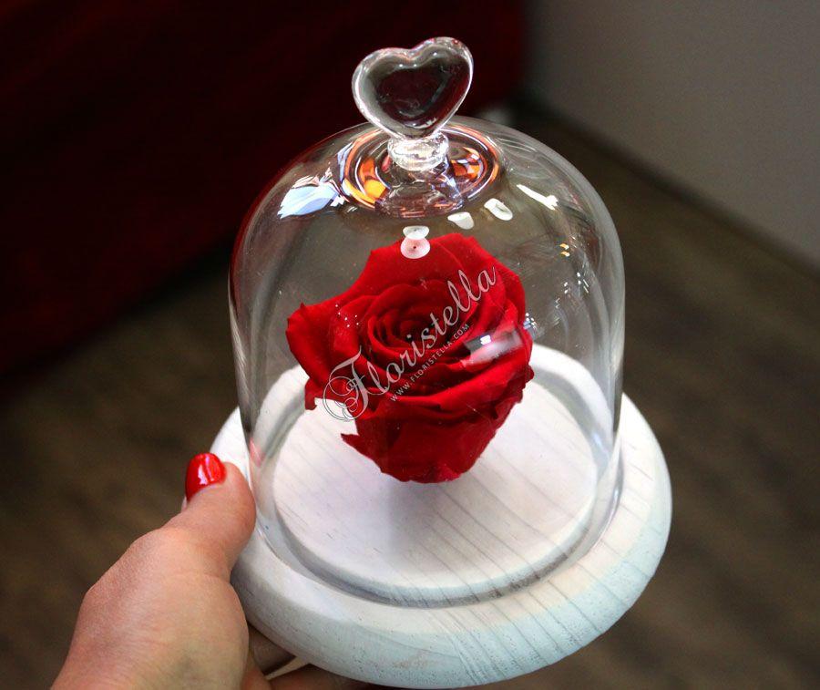 Неувядающая роза от цветочного домика Флористелла
