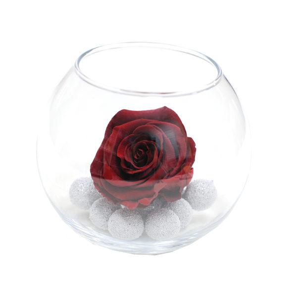Неувядающая бордовая роза Бургундия
