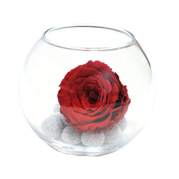Неувядающая красная роза Багровый гранат