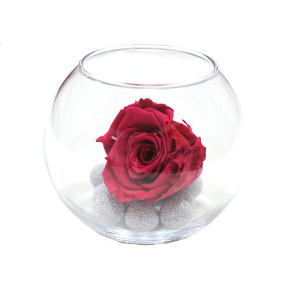 Неувядающая светло-красная роза Рубин