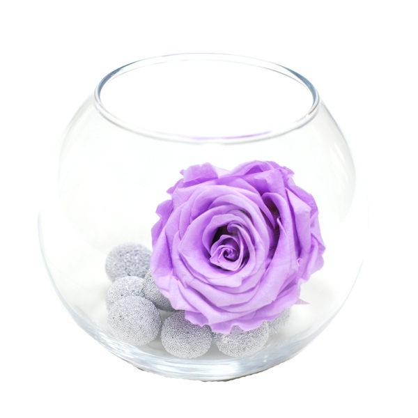 Лиловая неувядающая роза