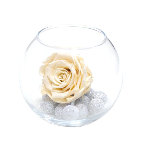 Кремовая неувядающая роза Латте
