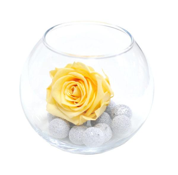 Персиковая неувядающая роза